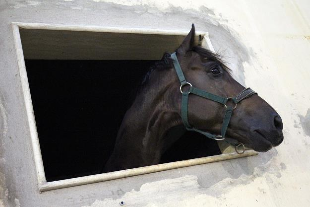 1 mln 600 tysięcy złotych - to zysk z ubiegłorocznej aukcji koni arabskich /PAP