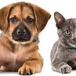10 chorób, którymi możesz się zarazić od swojego zwierzaka domowego