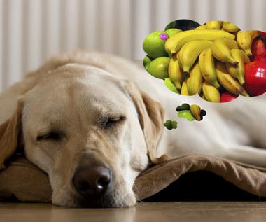 """10 """"ludzkich"""" pokarmów, które będą zdrowe dla psa"""