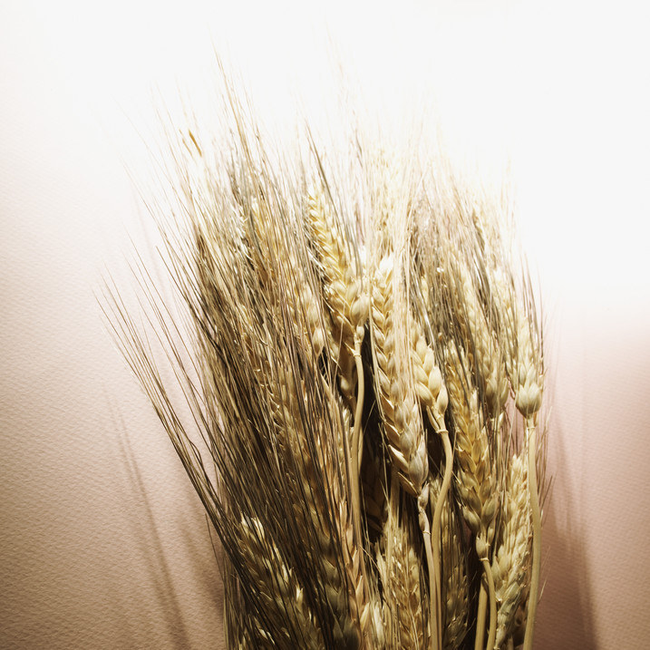 10 najbardziej szkodliwych zbóż na świecie /© Photogenica