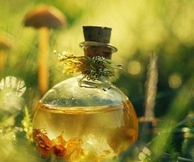 10 niesamowitych zastosowań olejku eukaliptusowego