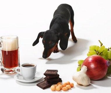 10 pokarmów trujących dla zwierząt