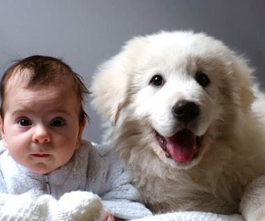 10 ras psów najlepszych dla rodziny