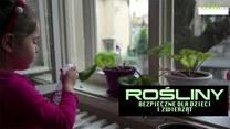 10 roślin bezpiecznych dla dzieci i zwierząt. Co hodować w domu?