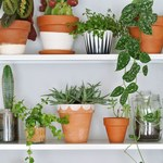 10 roślin, które tworzą odpowiedni mikroklimat w pomieszczeniu