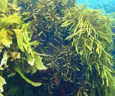 10 wartości odżywczych morskich wodorostów