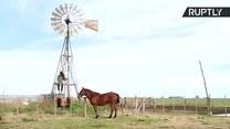 11-latka z Argentyny wspina się na wiatrak, by złapać zasięg i... wysłać pracę domową nauczycielowi