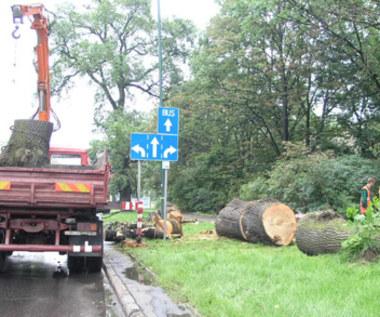 113 drzew groźnych dla pijanych kierowców