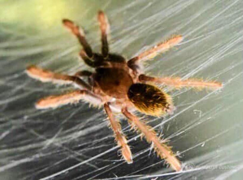 119 małych pająków ukryto w plastikowych fiolkach /Bureau of Customs NAIA/Newsflash/EuroPics /East News
