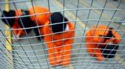 """""""12-latek"""" wciąż przetrzymywany w Guantanamo"""