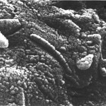 20 lat od odkrycia bakterii w marsjańskim meteorycie