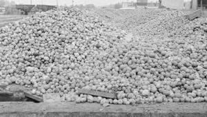 20 maja 1979 r. Protest sadowników