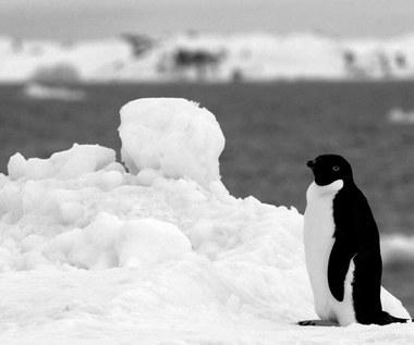 23 stycznia 1959 r. Sowieci przekazują Polsce stację antarktyczną