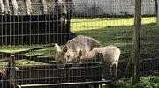 25. urodziny Leśnego Pogotowia! Placówka pomogła tysiącom zwierząt
