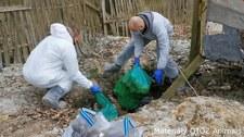 250 padłych psów, ponad 130 żyjących w skandalicznych warunkach. Właściciele pseudohodowli aresztowani