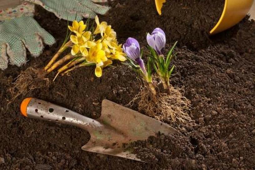 273 zł na godzinę za bycie wirtualnym ogrodnikiem. Brzmi zachęcająco! /East News /East News