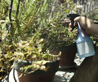 3 domowe preparaty, bez których nie możesz się obejść w ogrodzie