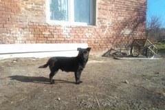 3-latka z Pierzwina została odnaleziona. Pomógł jej pies Czarek.
