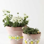 3 proste triki sadzenia roślin doniczkowych