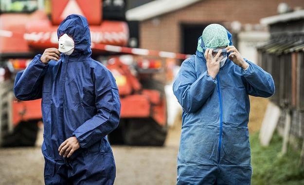 31 grudnia potwierdzono pierwsze w 2019 r. ognisko grypy ptaków /AFP