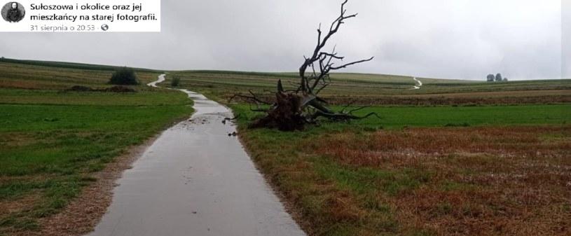 31 sierpnia wiatry i deszcz powaliły na ziemię dąb w Sułoszowej /@SułoszowaiOkoliceOrazJejMieszkańcyNaStarejFotografii /Facebook