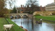 36 godzin w Cambridge