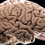 4 główne przyczyny zanieczyszczenia mózgu