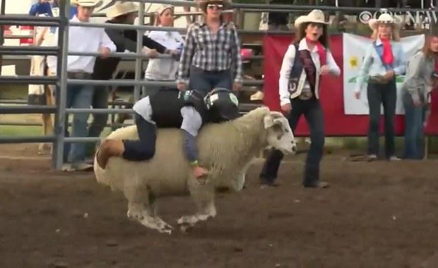 5-letni mistrz rodeo ujechał na grzbiecie owcy aż 9 sekund. Zobaczcie wideo!