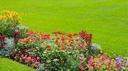 5 naturalnych sposobów na poprawienie jakości ziemi w ogrodzie