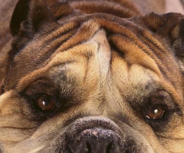 5 naturalnych sposobów na pozbycie się pcheł u zwierząt domowych