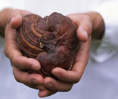 5 powodów, dla których powinieneś spróbować kawy grzybowej