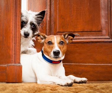 5 problemów ze zwierzętami domowymi