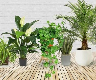 5 roślin, które powinnaś umieścić w sypialni, aby lepiej spać