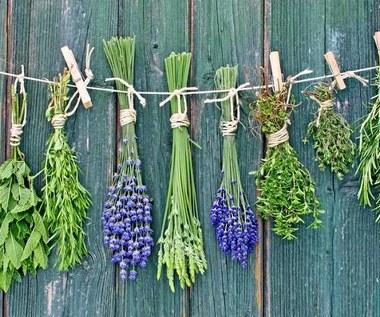 5 roślin o zaskakujących właściwościach leczniczych