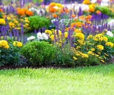 5 sposobów, aby ustrzec swoje kwiaty przed szkodnikami