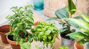 5 sposobów jak dbać o kwiaty o ozdobnych liściach