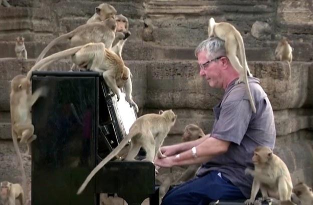 59-letni Barton zagrał koncert dla makaków w Tajlandii (zrzut ekranu nagrania) /RMF24