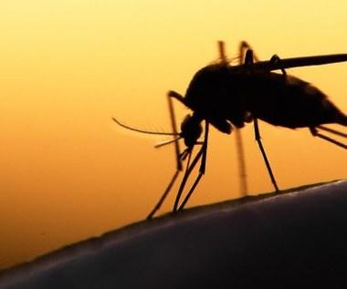6 domowych sposobów na odstraszenie komarów