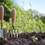 6 niesamowitych porad i wskazówek ogrodniczych