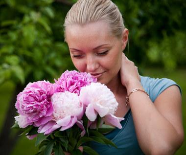 6 roślin, które odświeżą powietrze w twoim domu