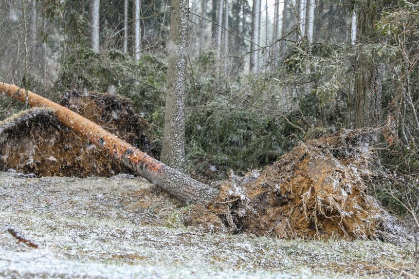 687 interwencji w związku z silnym wiatrem i opadami deszczu /Michal Adamowski /Reporter