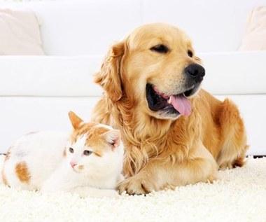 7 zaskakujących sposobów na wykorzystanie sierści zwierząt