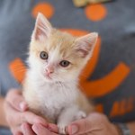 8 najczęstszych kocich chorób i problemów ze zdrowiem