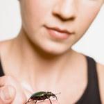 8 naturalnych sposobów na ochronę twojego domu przed insektami