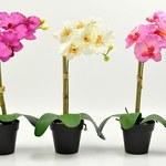 8 roślin do sypialni, dzięki którym będziesz dobrze spać