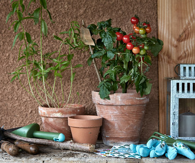 8 roślin, które możesz uprawiać w domu
