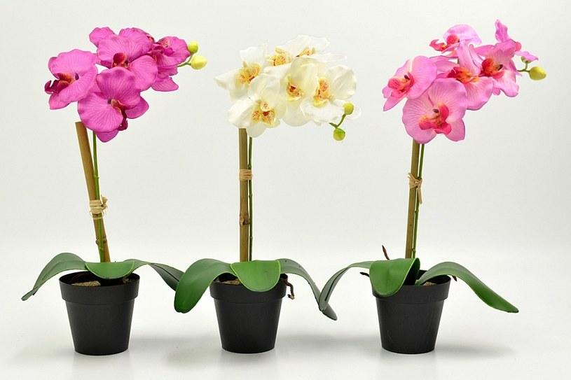8 roślin które pilnują by dobrze ci się spało /© Photogenica