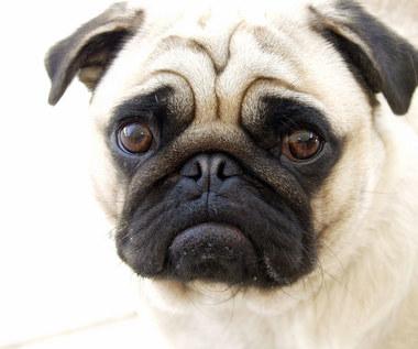 8 rzeczy, których twój pies nie cierpi
