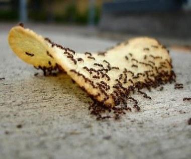 8 sposobów na pozbycie się mrówek