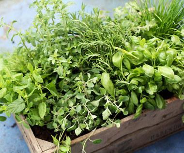 8 ziół, które warto mieć domowym ogródku